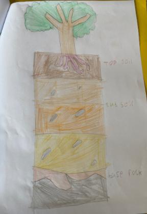 Grace T Yr 3 Soil Investigation